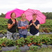 Strawberry pickin' Brolly girls