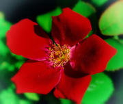 15th Feb 2019 - Get Pushed Week 342 - red and green