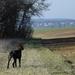 a walk with Moka