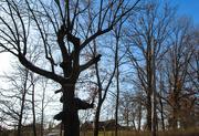 17th Feb 2019 - Odd shaped tree