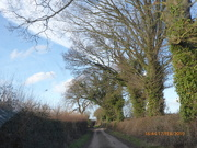 17th Feb 2019 - Driving along a country lane....