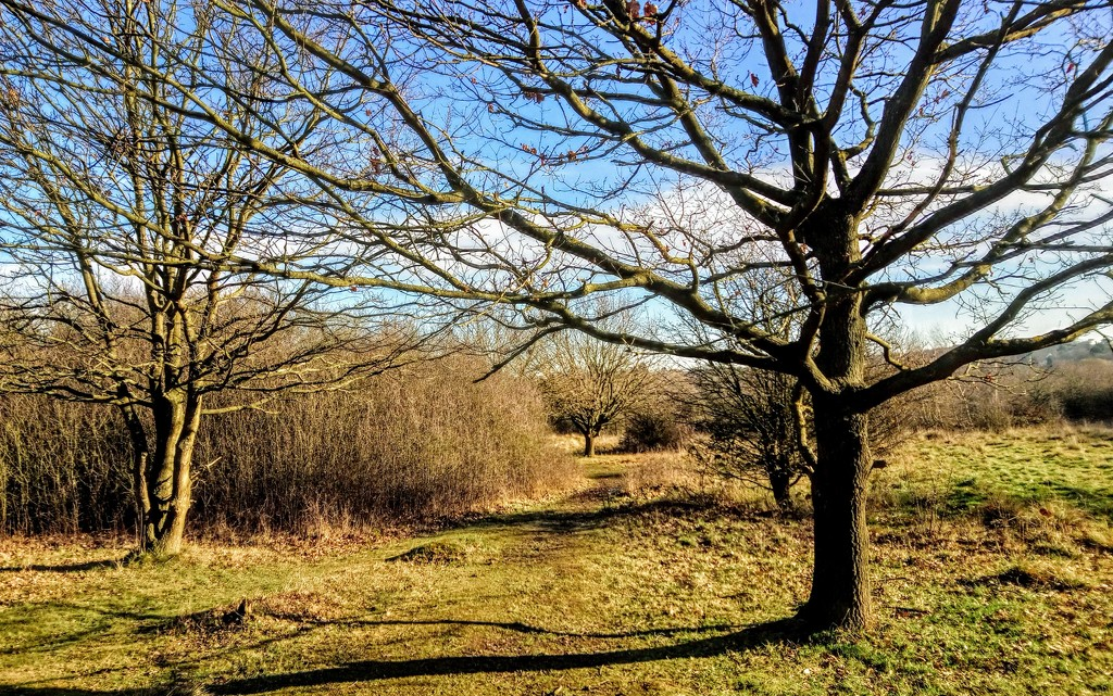 Winter trees in sunlight, Epping Forest by boxplayer