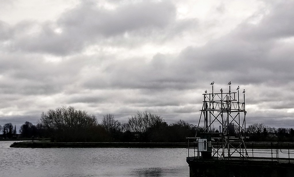Perching gulls at Walthamstow Wetlands by boxplayer