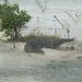 Y10 D048 Saltwater Crocodile