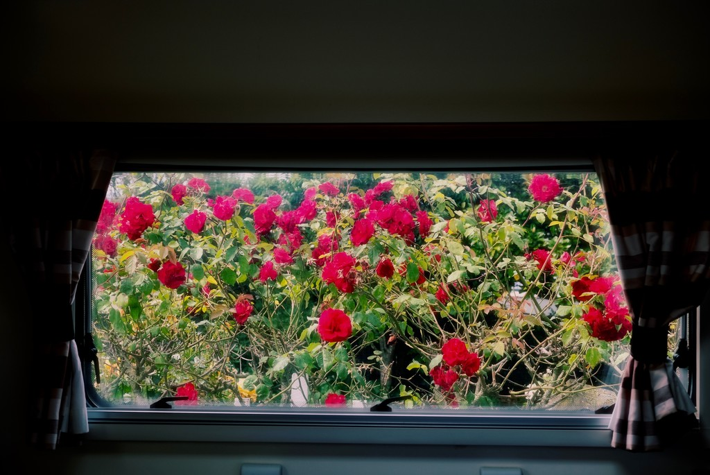 Out the back window.. by maggiemae