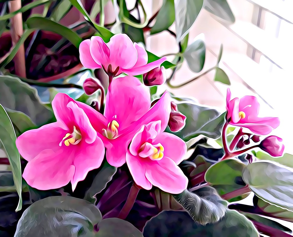 African Violet by stownsend