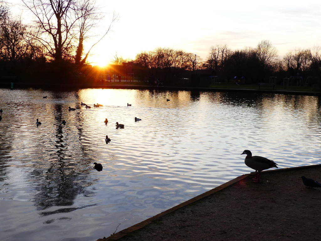 Sunset From Tooting Bec Common Pond by snoopybooboo