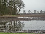 18th Feb 2019 - wet land