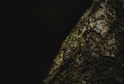 16th Feb 2019 - Cicada