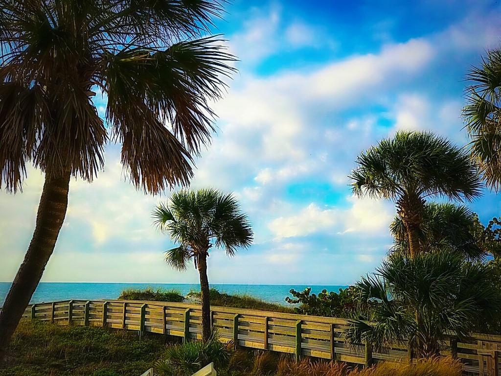The Day I Met The Beach by gardenfolk