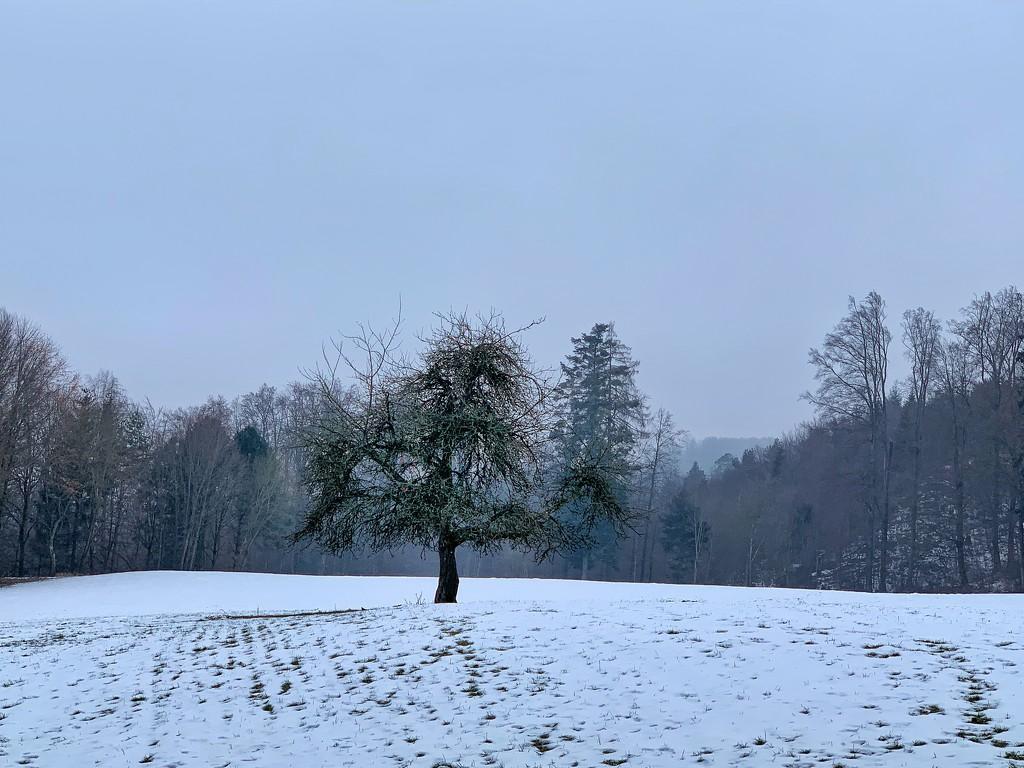 The tree.  by cocobella