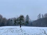 19th Feb 2019 - The tree.