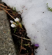 18th Feb 2019 - Under the Snow