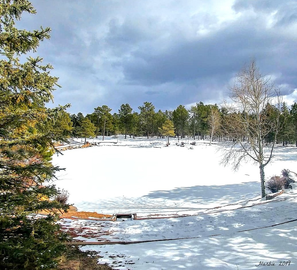 Frozen Pond by harbie
