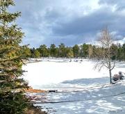 18th Feb 2019 - Frozen Pond