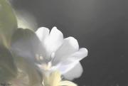 14th Feb 2019 - Flower