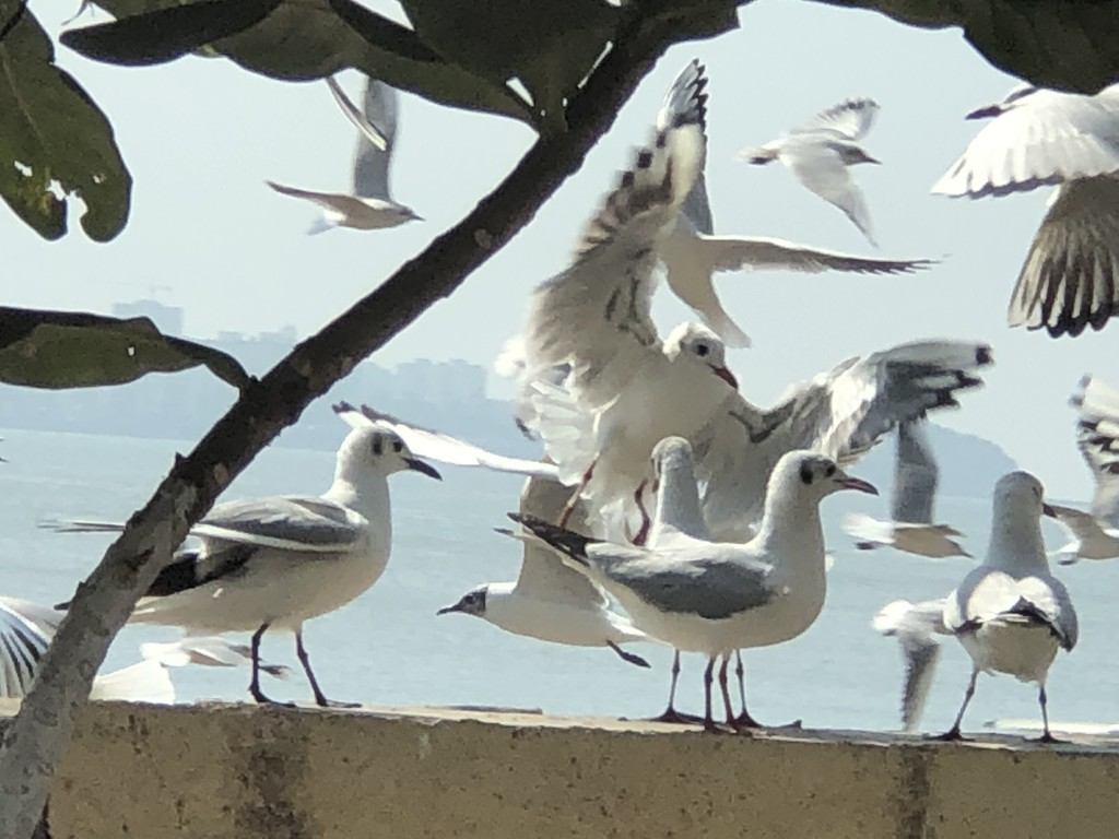 Migratory birds at Chowpatty  by veengupta