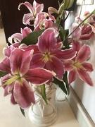 13th Feb 2019 - Fragrant Asiatic Lilies
