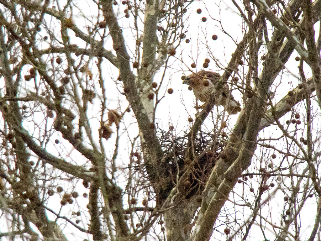 Working on the nest by christinemgrote