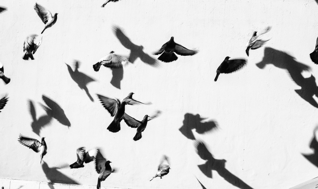 birds and their shadows by caterina
