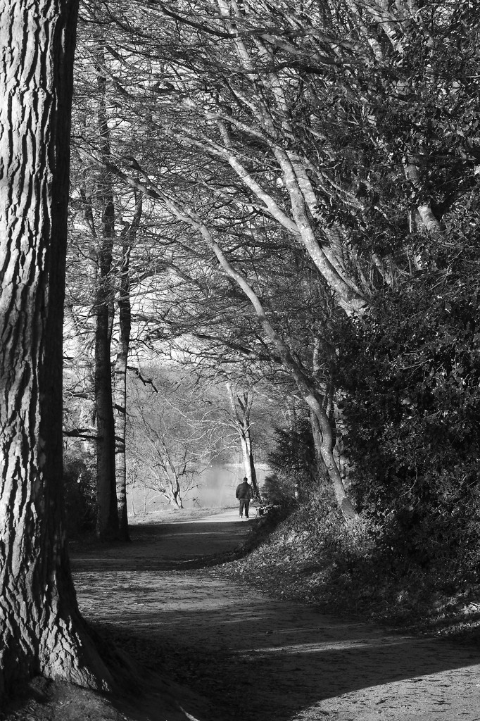 Leading Lines: Lake Path, Paimpont  by s4sayer