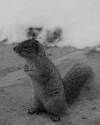 19th Feb 2019 - February 19: Squirrel