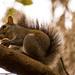 Squirrel at Work!