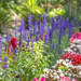 city park garden by ulla