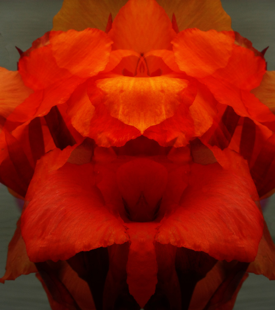 Canna Abstract by kali66