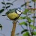 BIRD ON A SUNNY STICK by markp