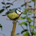 BIRD ON A SUNNY STICK