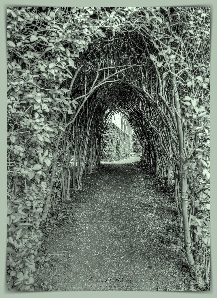 Archway by carolmw