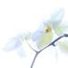 2019 02 20 - Orchid - High Key