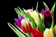 20th Feb 2019 - Tulips from Tesco...