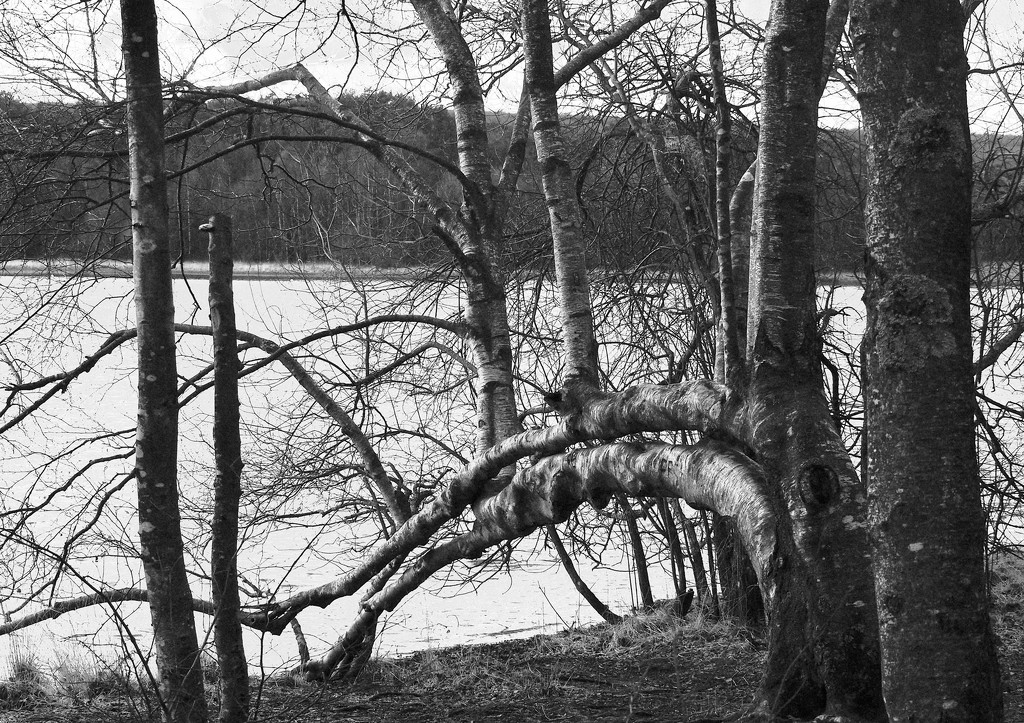 Leading Lines: Tree with Hands, Paimpont Lake  by s4sayer