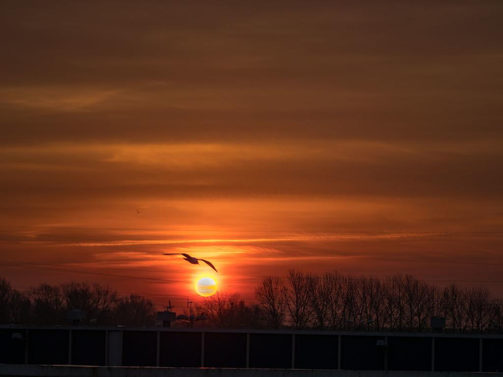 At sunrise by haskar