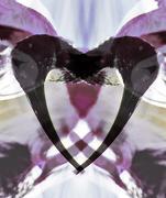 22nd Feb 2019 - ibis heart