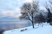 21st Feb 2019 - Winters Walk