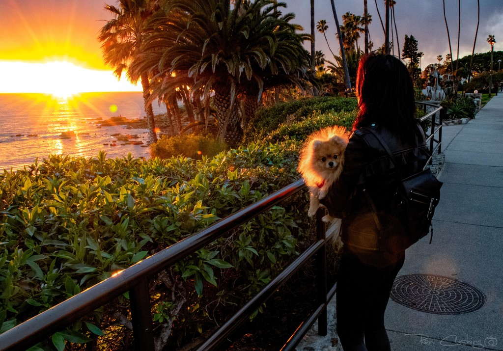 Backlit Pooch by stray_shooter