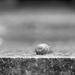 Snail by yaorenliu