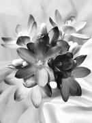 22nd Feb 2019 - Fragility in black and white