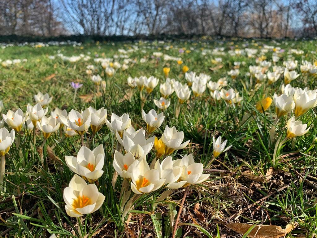 Spring! by cocobella