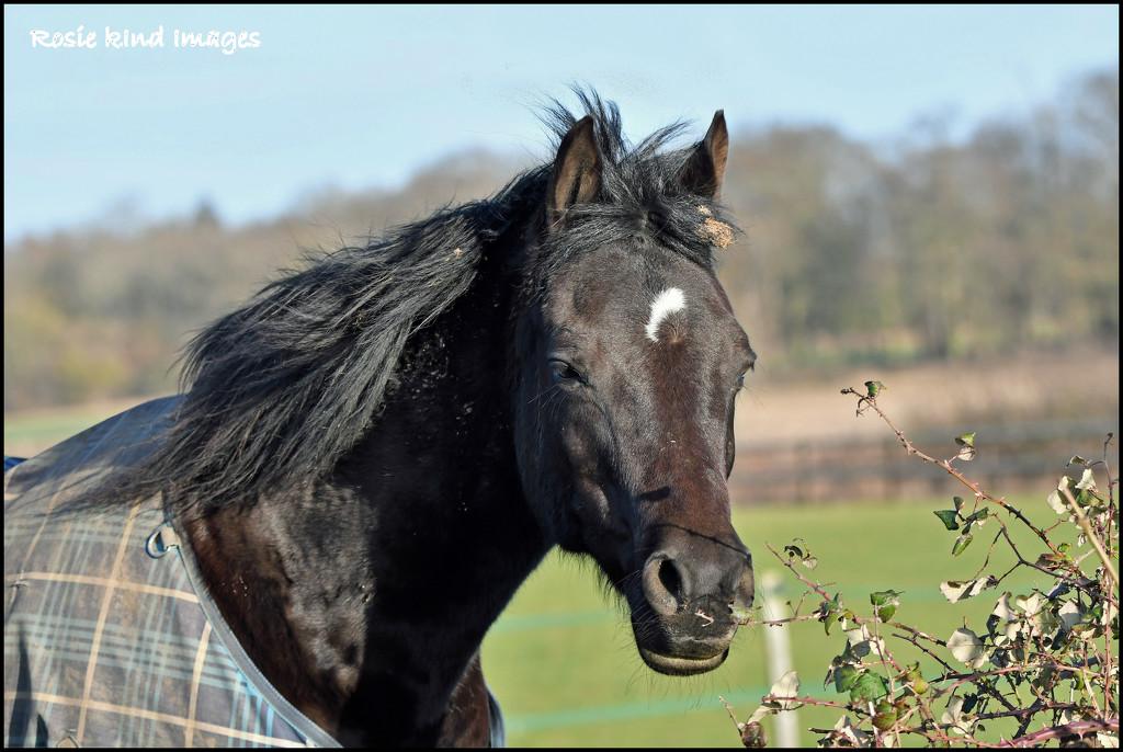 Hill Farm horse by rosiekind