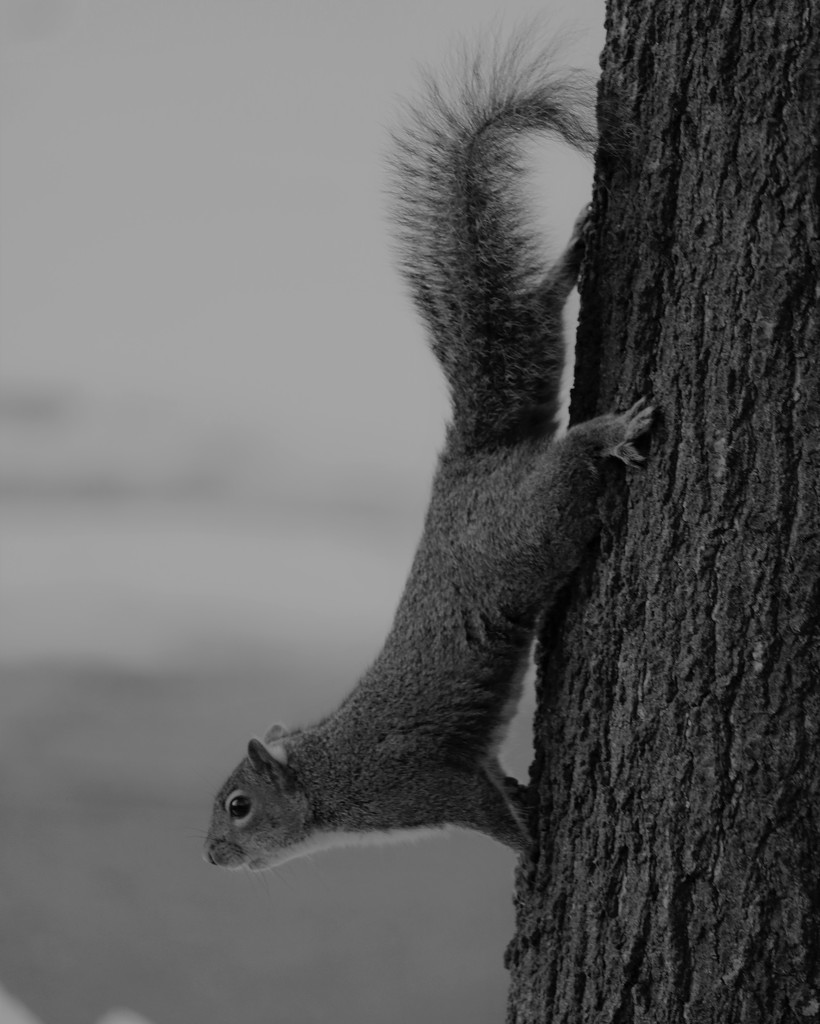 February 22: Squirrel by daisymiller
