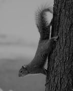 22nd Feb 2019 - February 22: Squirrel