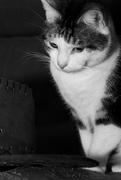 22nd Feb 2019 - Wherever I lay my cat uhh hat...