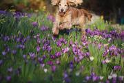21st Feb 2019 - springing into spring