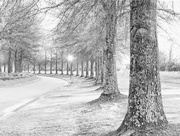 22nd Feb 2019 - Southern Winter