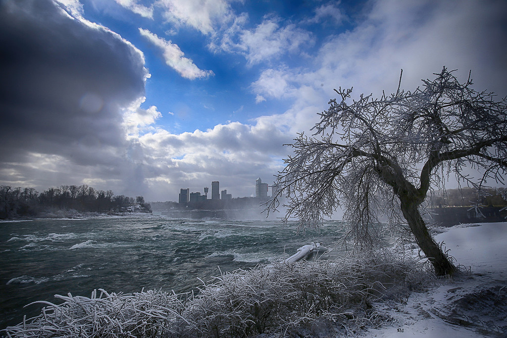 Frozen River Tree by pdulis