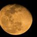 Last Night's Moon!